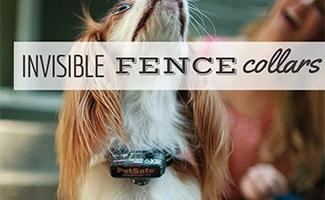 Dog with Invisible Fence Collar (caption: Invisible Fence Collar)