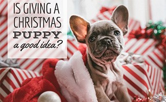 Puppy with presents (caption: Is Giving A Christmas Puppy A Good Idea?)