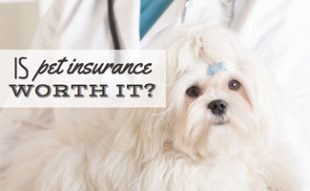 Dog At Vet: Is Pet Insurance Worth It?