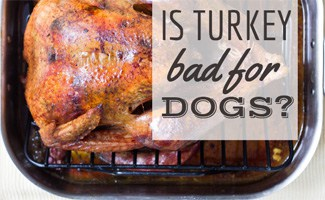 Turkey roasted (caption: is turkey bad for dogs?)