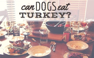 Is turkey bad for dogs?