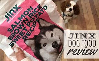 Cavalier King Charles Spaniel Dog looking at bag of Salmon Jinx Dog Food (caption: Jinx Dog Food Review)