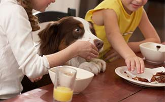 Kids giving dog table scraps