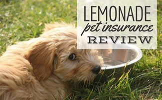 Dog laying in grass with water bowl (caption: Lemonade Pet Insurance Review)