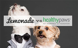 Two dogs dressed up looking for treat (caption: Lemonade vs Healthy Paws)