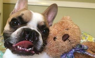 Lentil Bean dog and stuffed bear