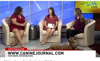 Sadie and DC's Let's Talk Live host Julie Wright chatting with Hadley the rescue pup on TV