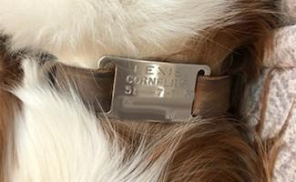 Dog tag on Lexie
