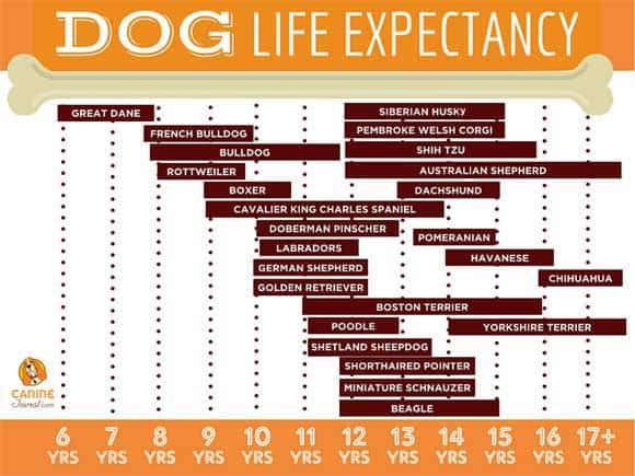 Life Expectancy Of Dogs How Long Will My Dog Live