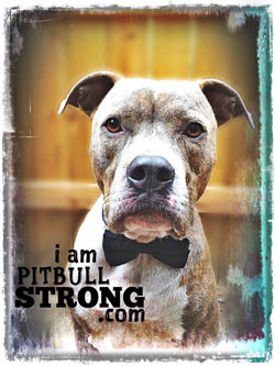 Mac the pitbull sad