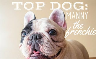 Top Dog Interview with Manny the Frenchie