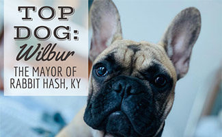 Wilbur Beast (Caption: Top Dog Wilbur Mayor Of Rabbit Hash, KY)