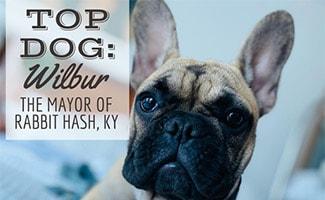 Wilbur Beast (Caption: Top Dog: Wilbur, The Mayor Of Rabbit Hash, KY)
