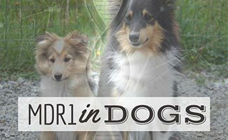 Two collies sitting in grass with DNA on top of them (Caption: MDR1 In Dogs)