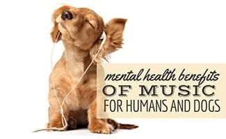 A puppy dog wearing earbuds and shaking its head with its eyes closed against a blank white background. (Caption: Mental Health Benefits Of Music For Humans & Dogs)