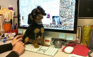 Monty the Dog at Petplan