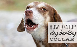 Dog barking (caption: how to stop dog parking collar)