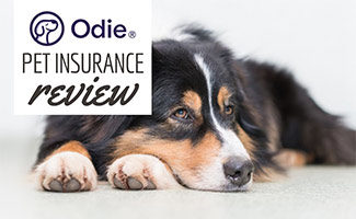Collie laying down (caption: Odie Pet Insurance Review)