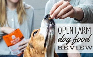 Dog eating Open Farm dog treats (Caption: Open Farm Dog Food Review)
