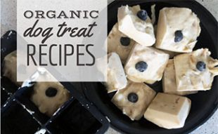 Organic frozen dog treats (caption: Organic Dog Treats Recipes)