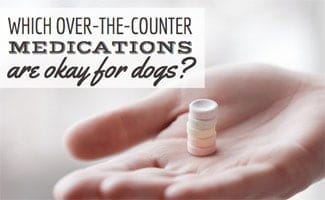 Person holding medicine in hand (caption: over the counter medications okay for dogs)