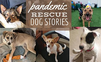 Rescue dogs (caption: Pandemic Rescue Dog Stories)