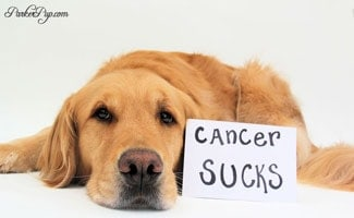 Parker Pup with Cancer Sucks sign