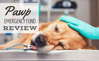 Sick dog lying on table at the vet (caption: Pawp Emergency Fund Review)