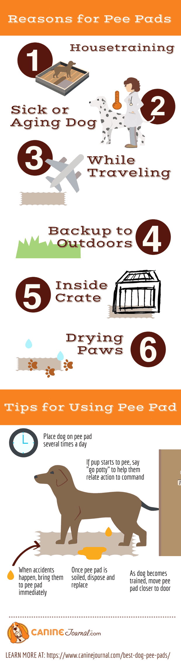 Reasons for Pee Pads Infographic