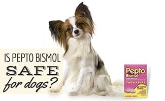 Small dog sitting next to box of Pepto Bismol (caption: Is Pepto Bismol Safe For Dogs?)