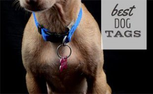 Best Dog Tags