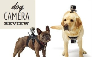 Dogs with cameras on them