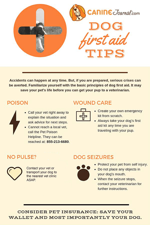 Dog First Aid Kit Tips