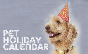 Holidays for pets