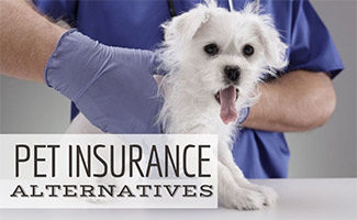 Dog being examined by vet (caption: Pet Insurance Alternatives)