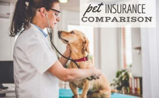 Young dog with red collar sitting obediently as it has its pulse checked by veterinarian (caption: Pet Insurance Comparison).