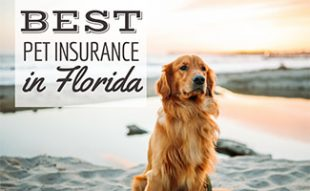 Golden dog sitting on beach (caption: Best Pet Insurance In Florida)