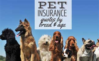 Different dog breeds (caption: Pet Insurance Quotes: Compare Different Breeds And Ages)