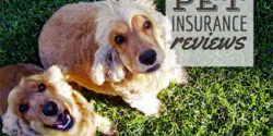 Pet Insurance Reviews and 2 dogs