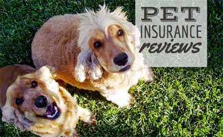 Two dogs in grass (caption: Pet Insurance Reviews)