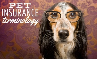 Dog with glasses on: Pet Insurance Terminology