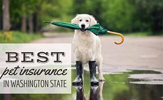 Dog standing in the rain puddle (Caption: Pet Insurance Washington State)