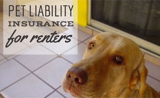 Pet Liability Insurance for Renters