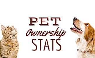 Cat and dog looking at the sky (Caption: Pet Ownership Statistics)