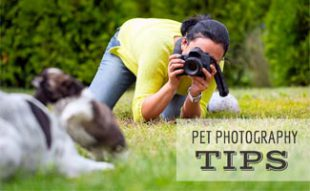 Woman taking photo of dog in grass