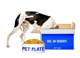 Pet Plate box with food in bowl and dog