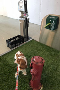 Dog on pet relief area in airport