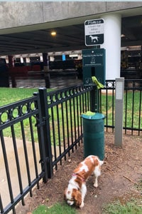 Dog peeing in airport relief area outside