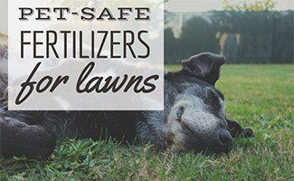 Dog laying in grass (caption: Pet-Safe Lawn Fertilizer)