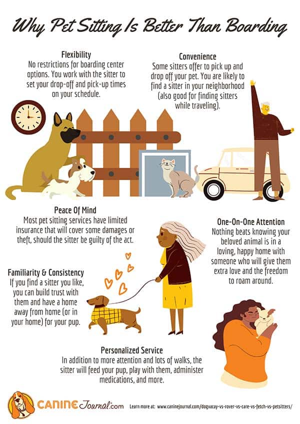 Why Dog Sitting Is Better Than Boarding